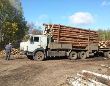 Лес злоумышленники вывозили на грузовиках. Фото Александра Ефанова.
