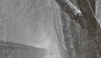 Снегопад в Рязани 1 апреля.