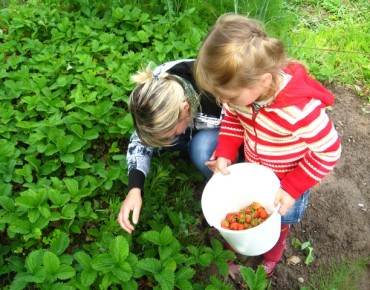 Mother and daughter collect a ripe strawberry on a bed
