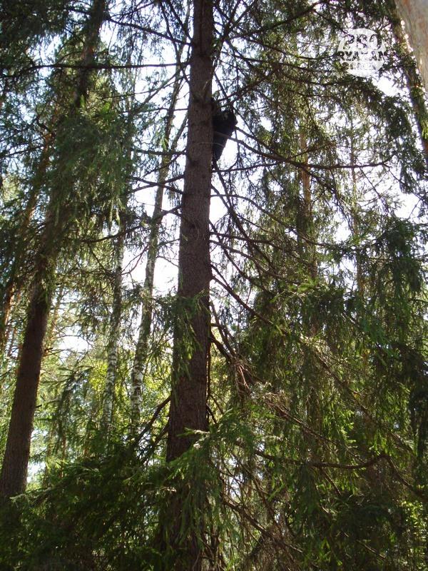 Тело было привязано нитками к стволу дерева.
