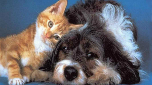free-images-of-cats-and-dogs-wallpaper