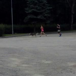 пробег собака
