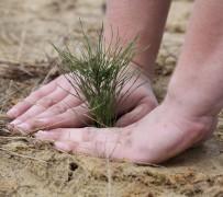 В Рязанской области пройдёт акция «Живи, лес»