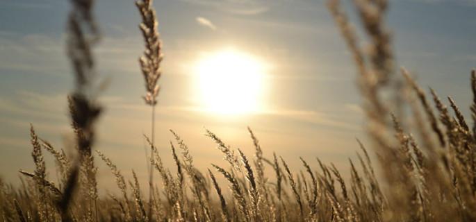 Фото с сайта Министерства сельского хозяйства и продовольствия Рязанской области