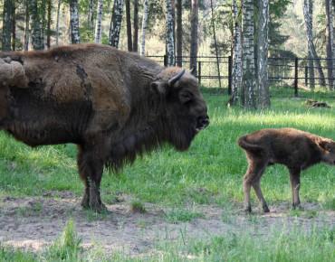 Фото с сайта Окского биосферного заповедника