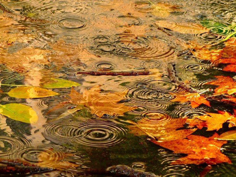 114845__gentle-rain_p